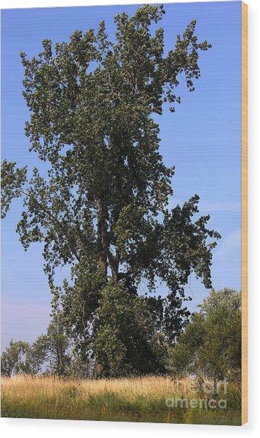 Tall Tree Wood Print by Sophie Vigneault
