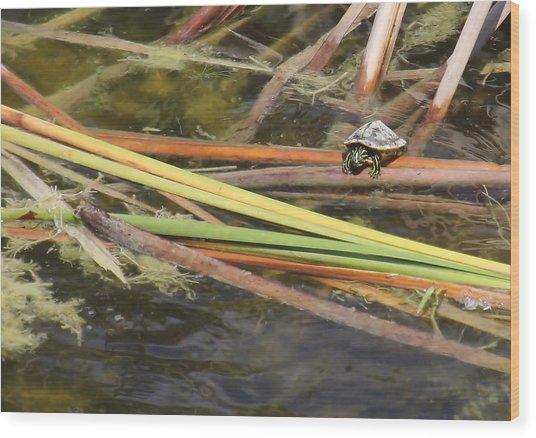 Teeny Tiny Turtle Wood Print by Rosalie Scanlon