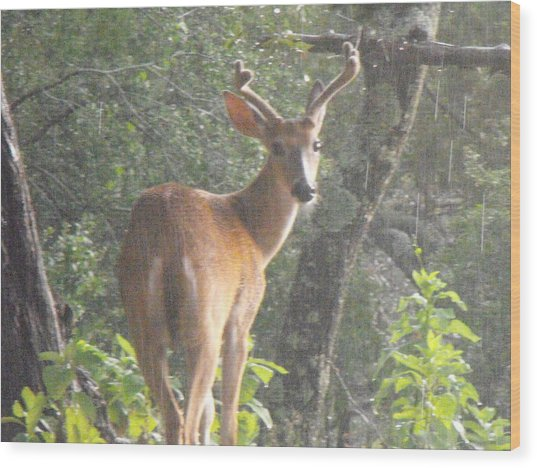 Texas Buck In The Rain Wood Print by Rebecca Cearley