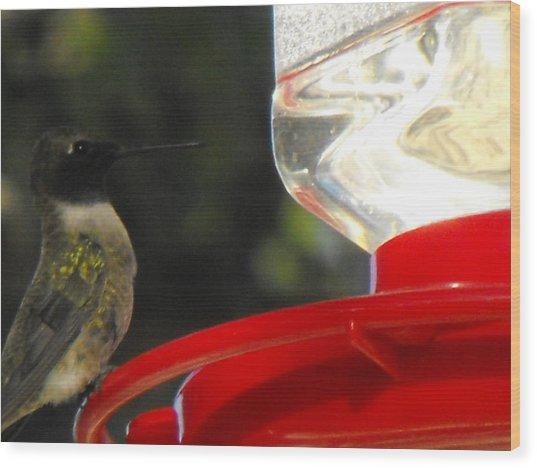 Texas Hummingbird Wood Print by Rebecca Cearley
