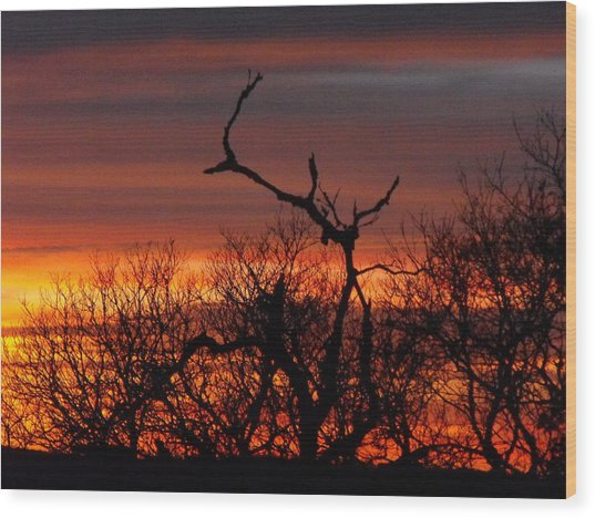 Texas Spanish Oak Tree  Sunset Wood Print by Rebecca Cearley