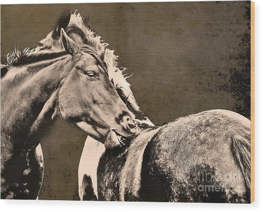 Textured Horses Wood Print by Darren Burroughs