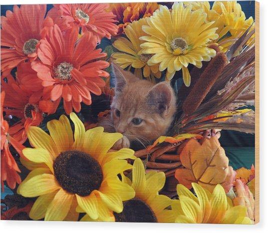 Thanksgiving Kitten Sitting In A Flower Basket Peeking Through Sunflowers - Kitty Cat In Falltime  Wood Print by Chantal PhotoPix