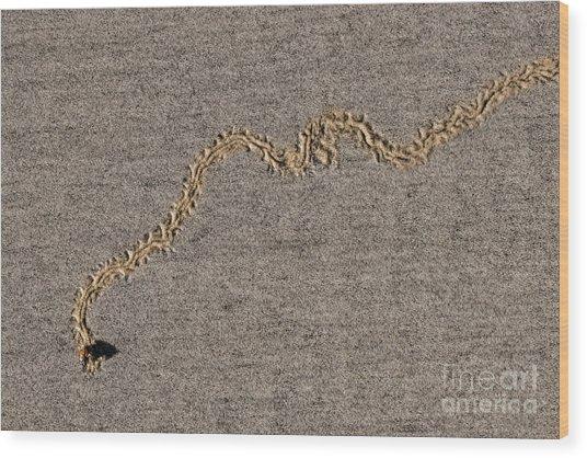 The Bee-line Wood Print