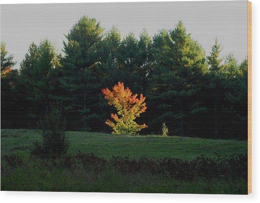 The Blazing Tree Wood Print