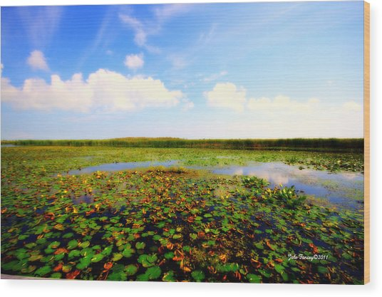 The Bog At Point Pelee Wood Print