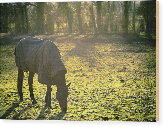 The Cold Horse Wood Print