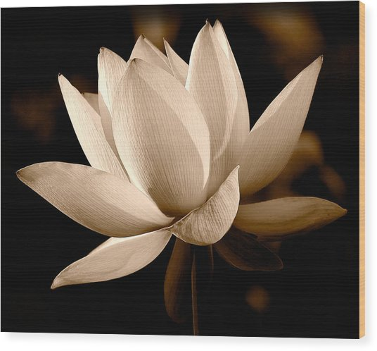 The Dragon Lily Wood Print
