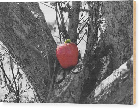 The Early Worm Gets The Apple Wood Print by Paul Louis Mosley