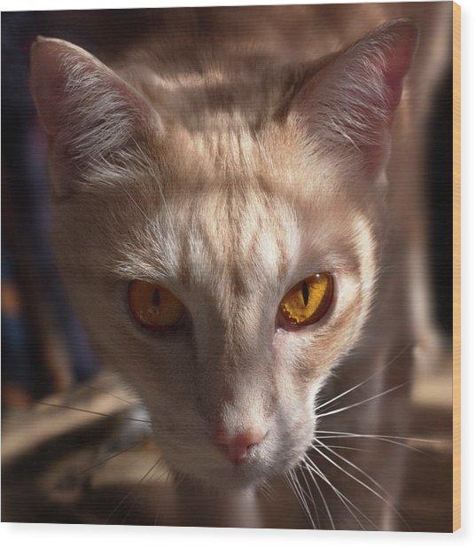 The Eyes Of Raymond Wood Print