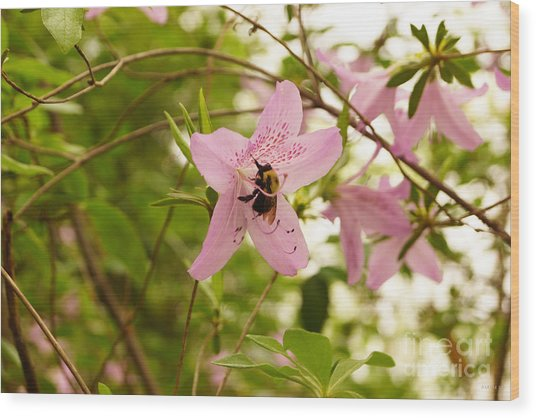The Flower And The Bumble Bee Wood Print