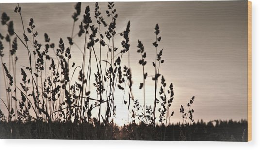 The Grass At Sunset Wood Print
