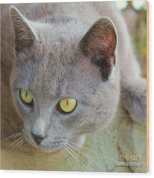 The Gray Cat Wood Print