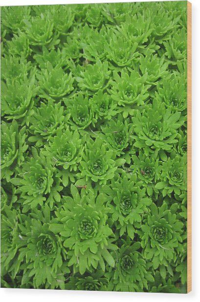 The Green Crowd Wood Print