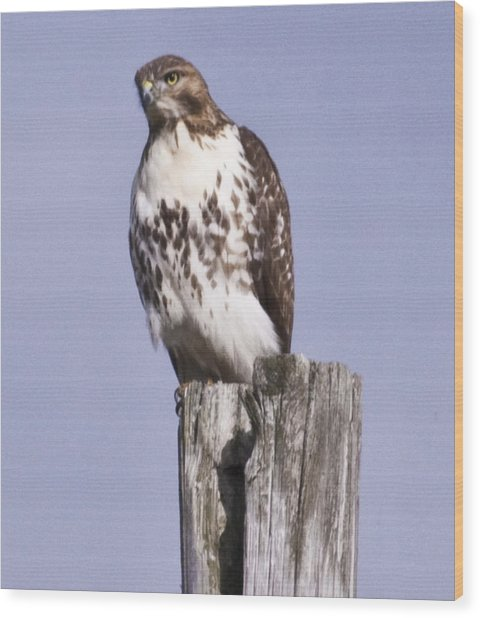 The Hawk Wood Print by Valerie Wolf