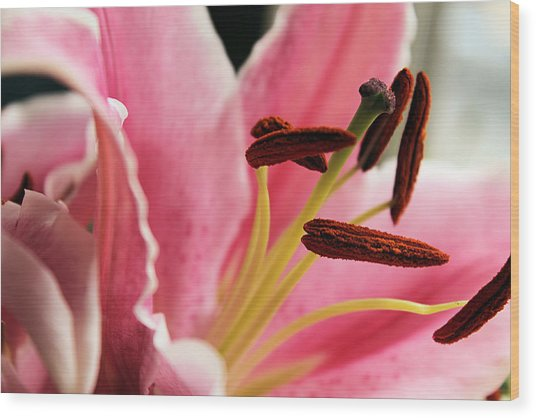The Heart Of The Lily Wood Print by Sarah Broadmeadow-Thomas
