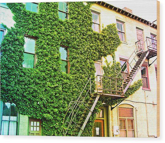 The Ivy And The Irony Wood Print