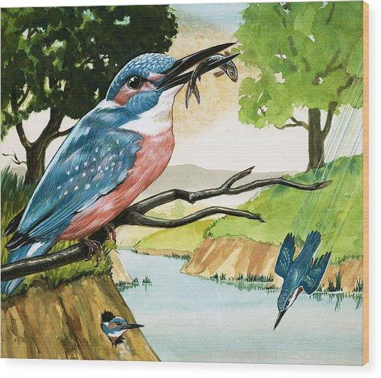 The Kingfisher Wood Print