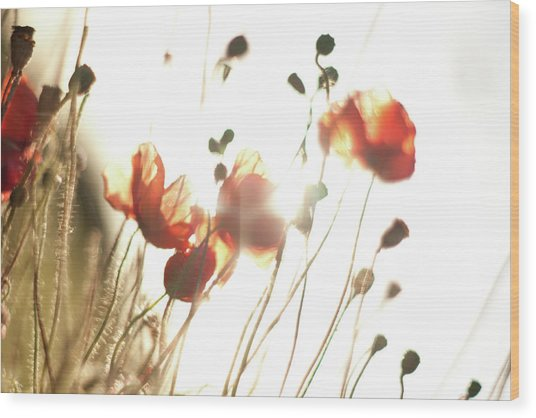 The Last Poppies Of Summer 2 Wood Print