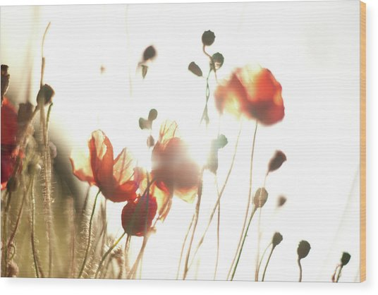 The Last Poppies Of Summer 3 Wood Print