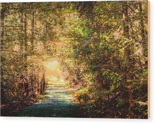 The Light Wood Print by Barry Jones