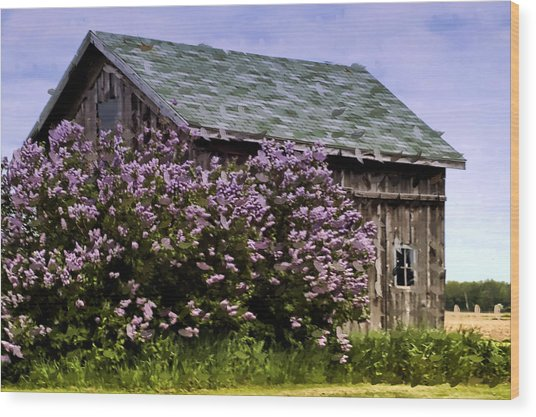 The Lilac Barn Wood Print by Cheryl Cencich
