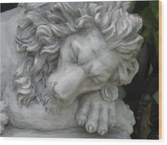 The Lion Sleeps Tonite Wood Print