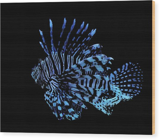The Lionfish 3 Wood Print by Robin Cox