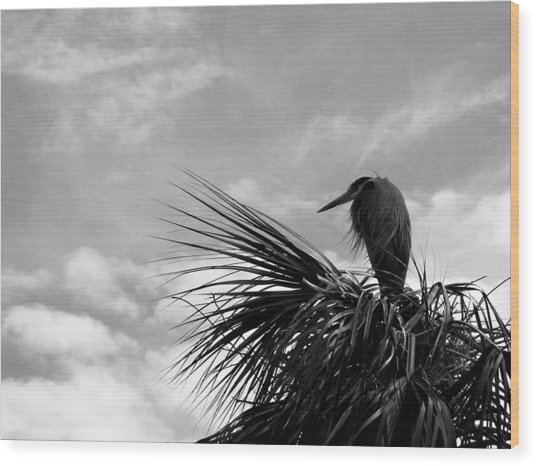 The Lonely Great Blue Heron Wood Print