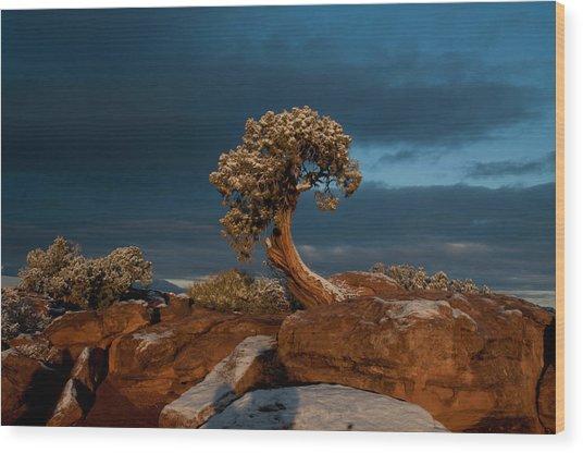 The Lonely Juniper Wood Print