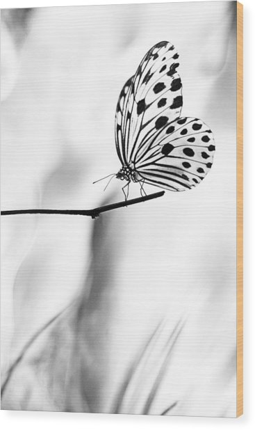 The Paper Kite Butterfly In Black And White Wood Print