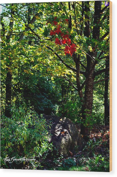 The Start Of Fall Color Wood Print by Ruth Bodycott