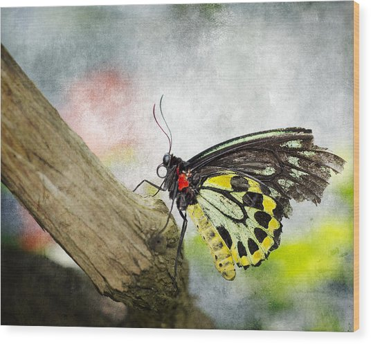 The Stillness Of A Butterfly Wood Print by Laura George
