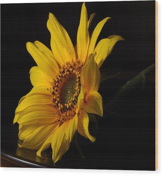 The Sun Flower  Wood Print by Davor Sintic
