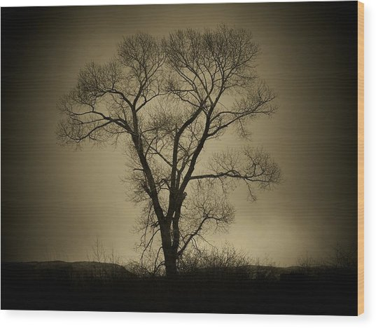 The Tree Wood Print by Big E Photography