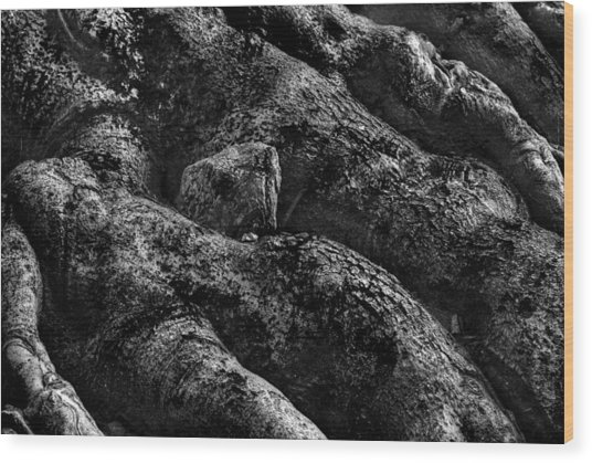 The Turtle Rock In Trees Wood Print