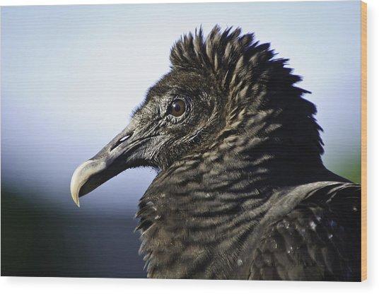 The Vulture Wood Print