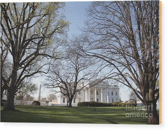 The White House And Lawns Wood Print