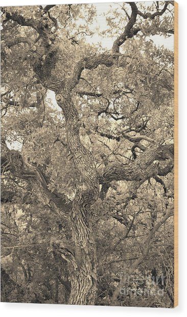 The Wicked Tree Wood Print