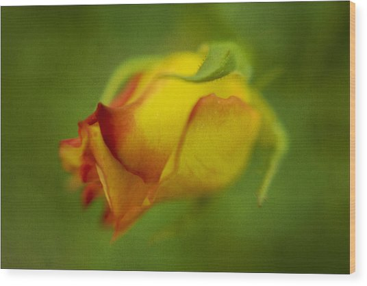 The Yellow Rose Wood Print