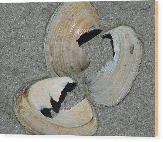 Three Shells Wood Print by Fredrik Ryden