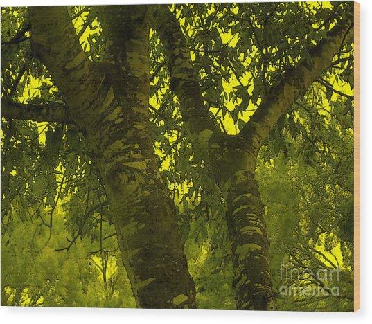 Through The Green Man's Eyes Wood Print