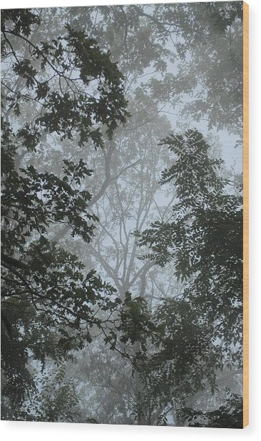 Through The Trees Wood Print by