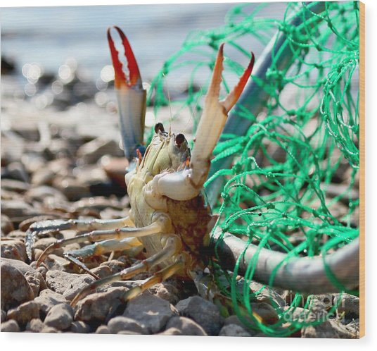 Crab Throw Me Something Mister Wood Print