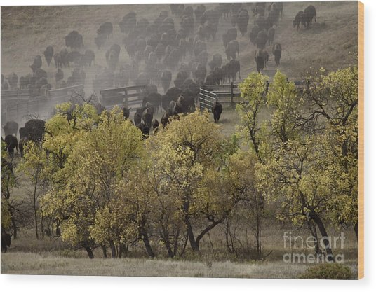 Thunder In The Black Hills Wood Print