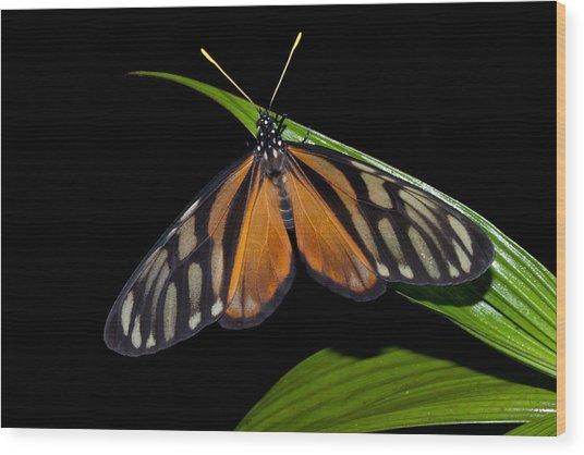 Tiger Isabella Wood Print