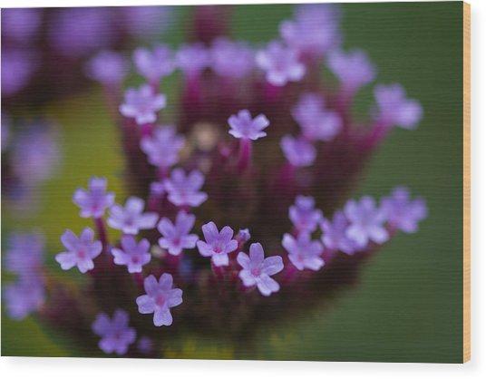 tiny blossoms II Wood Print