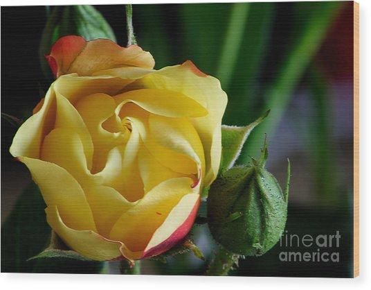 Tiny Rose Wood Print