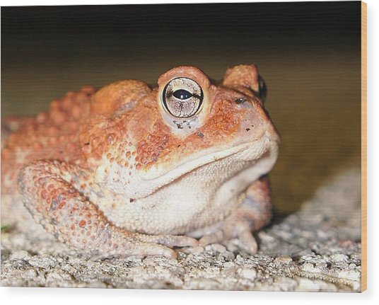 Toad You So Wood Print
