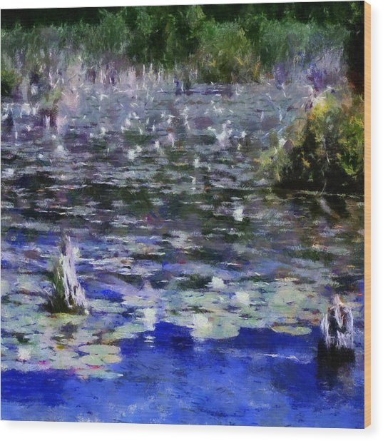 Torch River Water Lilies Ll Wood Print